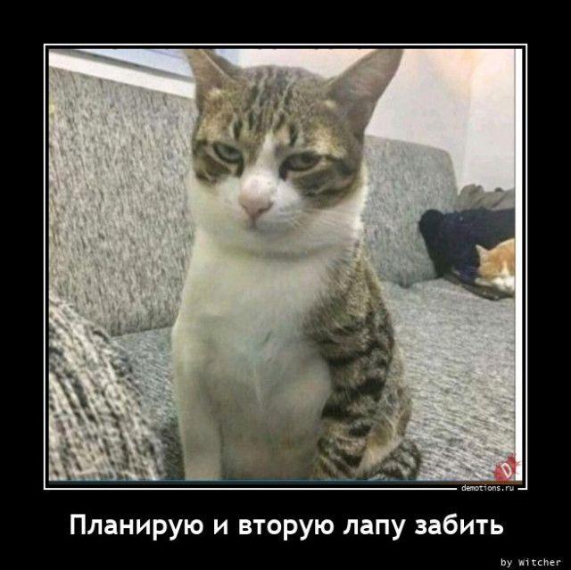 1603354134_demy-11.jpg