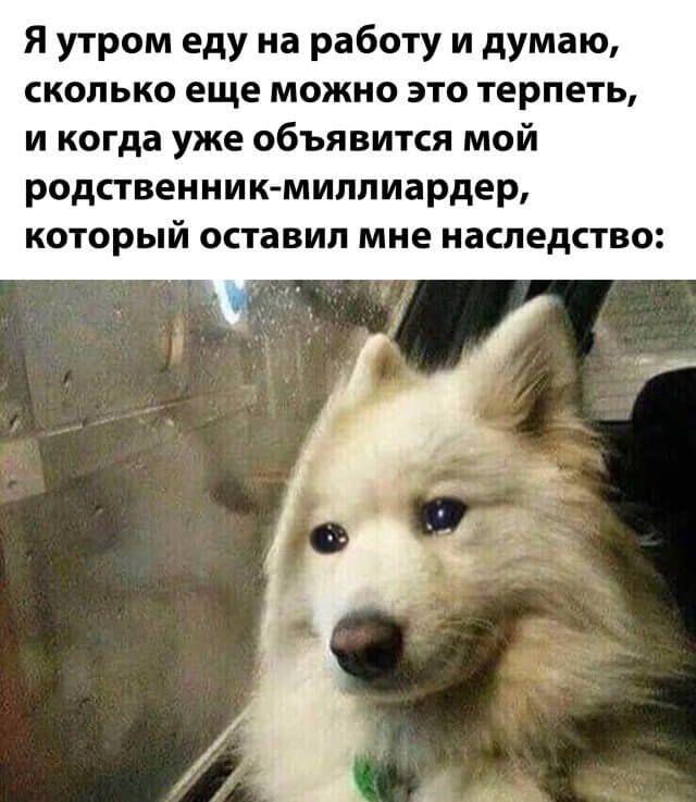 1603664031_lol-18.jpg