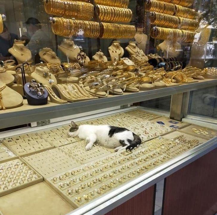 кот спит на золотых украшениях на витрине