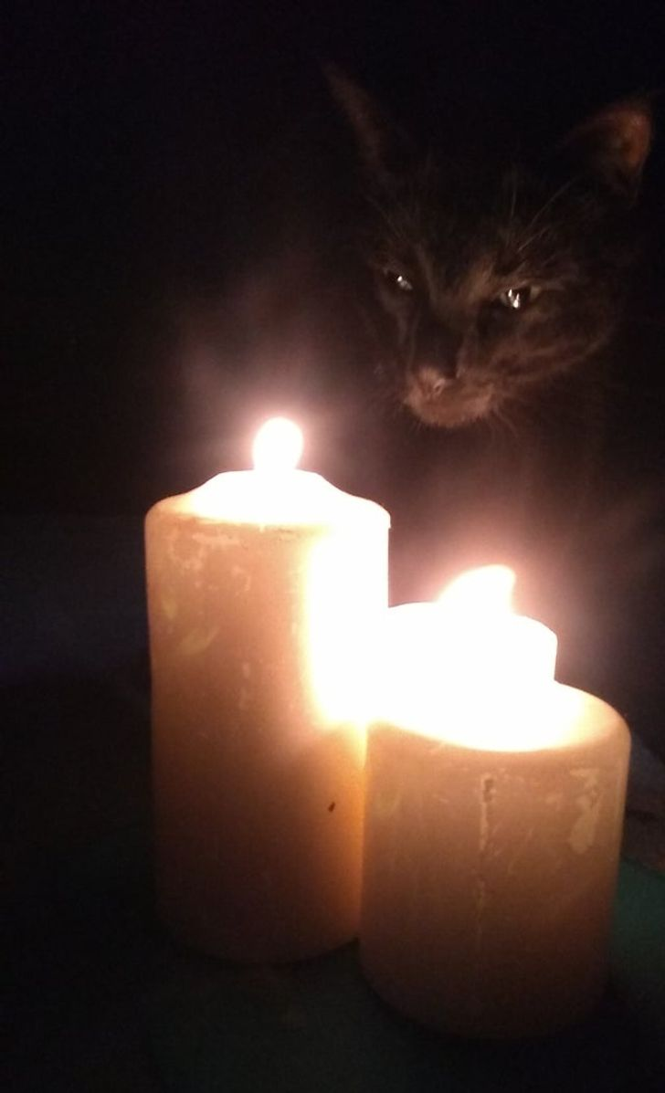 черный кот и свечи