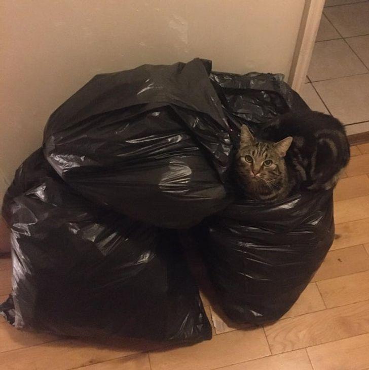 полосатый кот сидит на пакетах с мусором