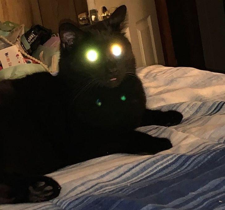черный кот со светящимися глазами