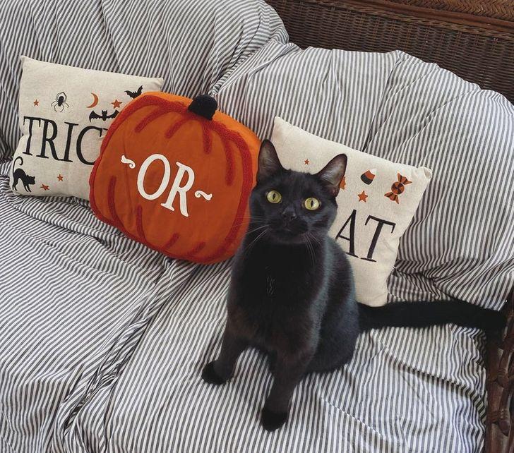 черная кошка сидит на диване