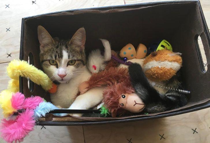 кот сидит в коробке с игрушками