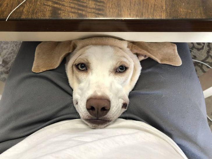 10+ домашних животных, чье поведение заменит вам антидепрессанты Приколы,Фото,животные,коты,собаки,юмор