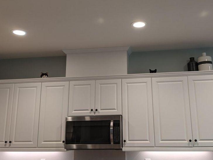 коты сидят на полке под потолком