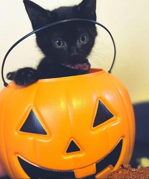 черный котенок сидит в тыкве