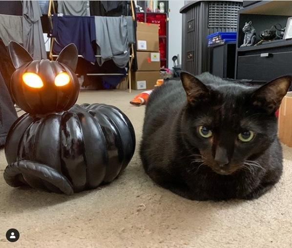 черный кот и черная тыква в виде кота