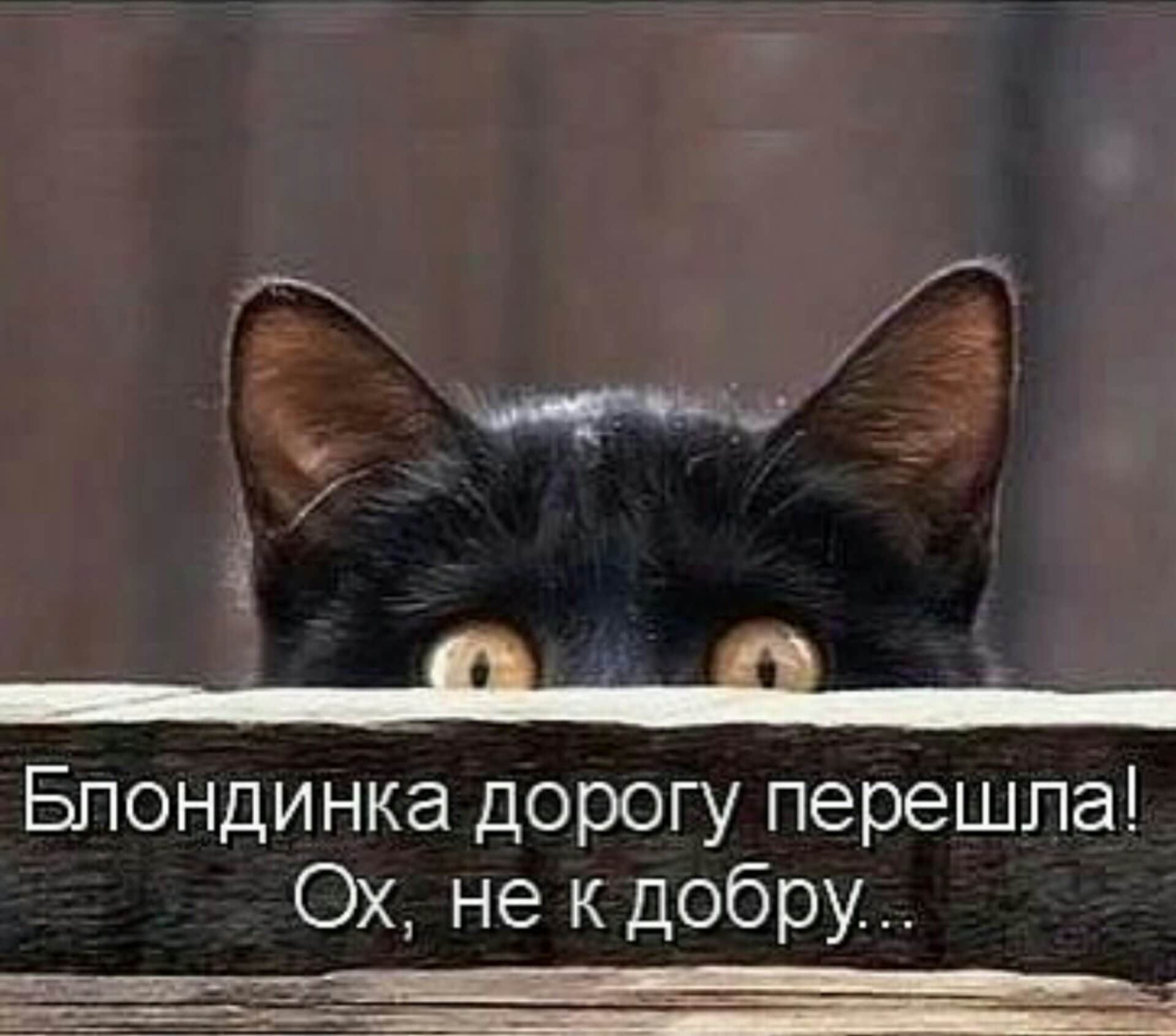 черный кот выглядывает из укрытия