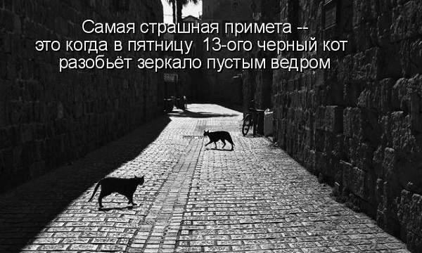 черные коты на улице