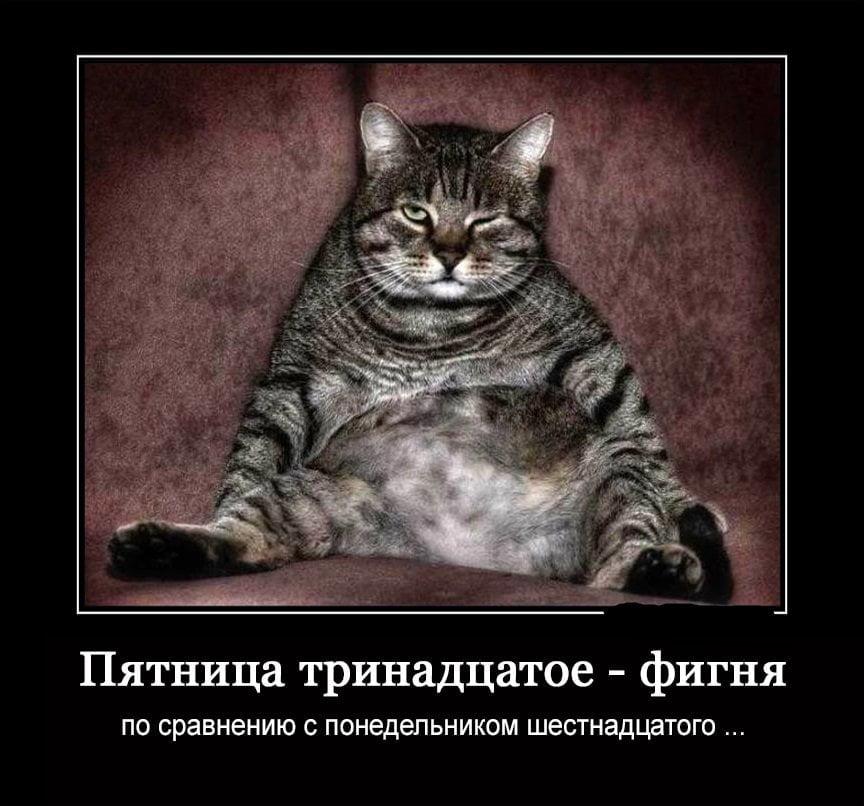 толстый полосатый кот демотиватор