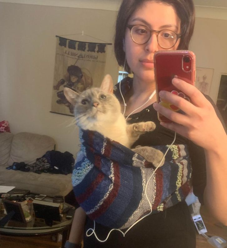 10+ фото котов, которые сидят и спят, где попало Приколы,Фото,коты,кошки,приколы,юмор