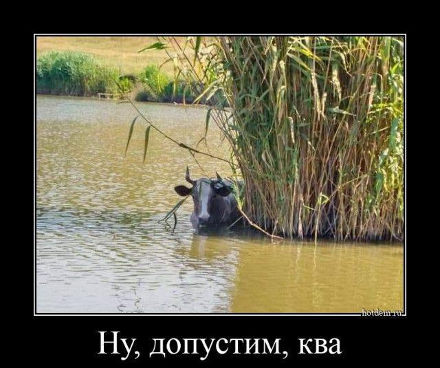 1605082187_demy-1.jpg