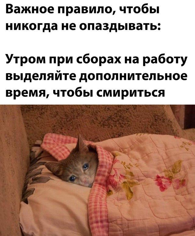 Весёлые картинки в ассортименте Приколы,myprikol,com