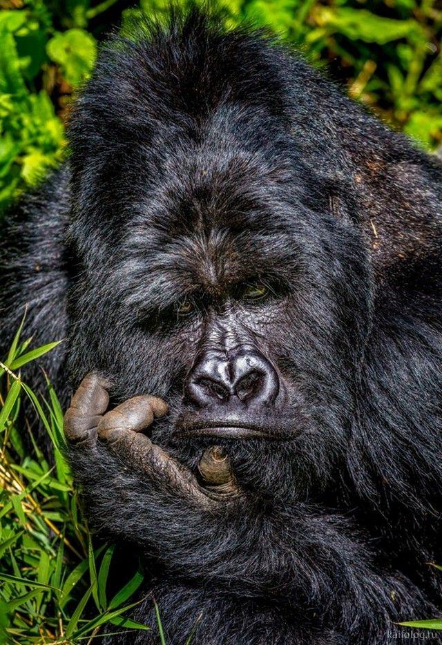 Победители конкурса Comedy Wildlife Photography Awards 2020