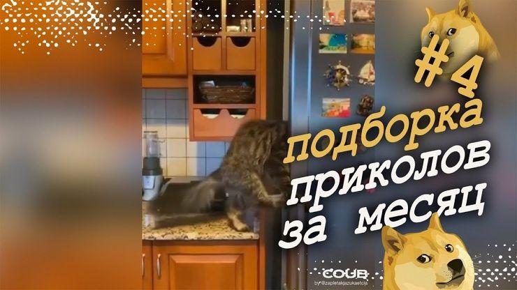 Подборка свежих приколов │ Ноябрь 2020│видео