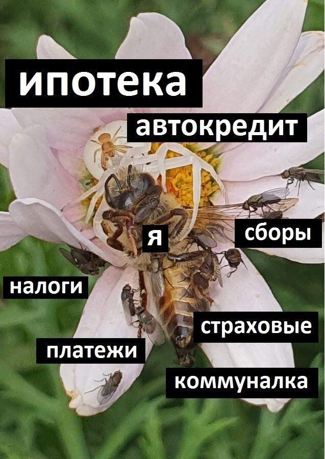 Пользователи шутят про кредиты и ипотеки Приколы,ekabu,ru,люди