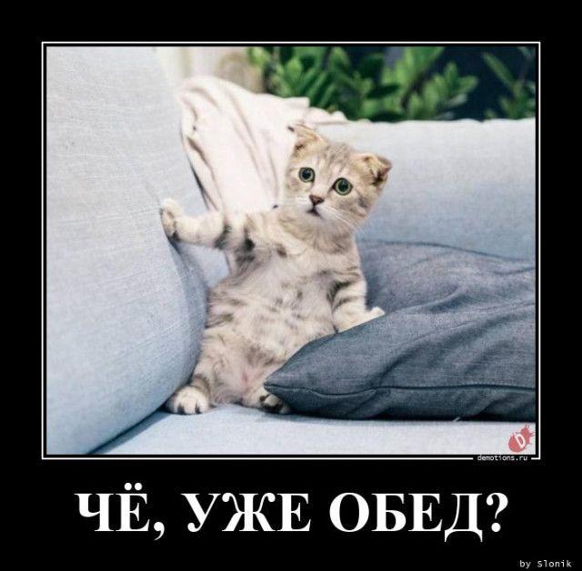 1606118218_demy-33.jpg