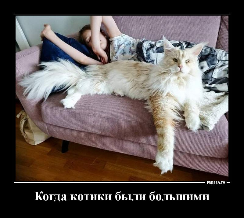 Демотиваторы 24.11.2020 Приколы,pressa,tv,юмор