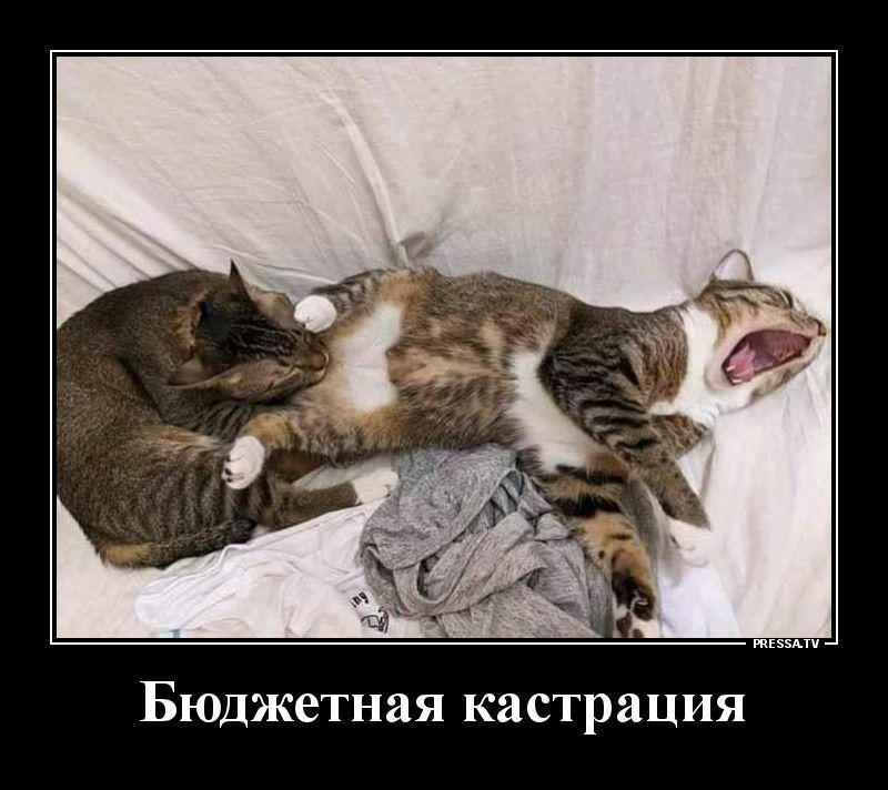 Кастрация Приколы,pressa,tv,коты