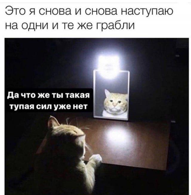 204546_7_trinixy_ru.jpg