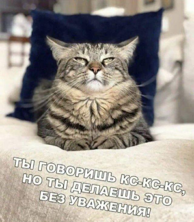 204546_9_trinixy_ru.jpg
