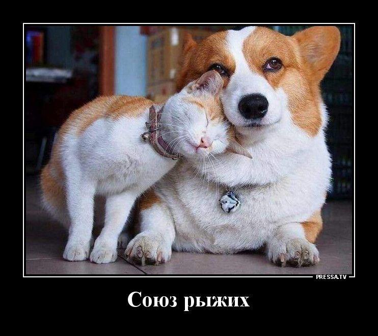 Демотиваторы 30.11.2020 Приколы,pressa,tv,юмор