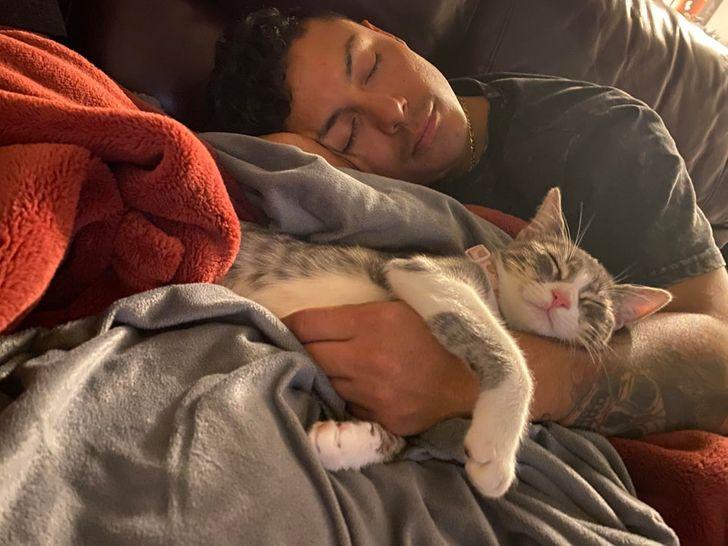 кошка спит с парнем на диване