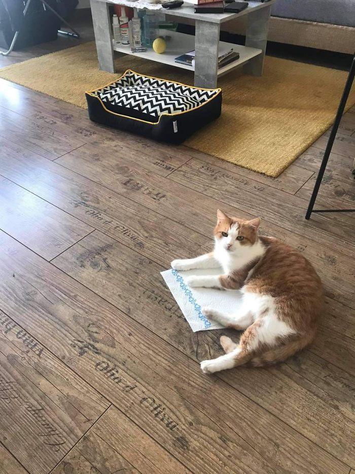 рыже-белый кот лежит на полу