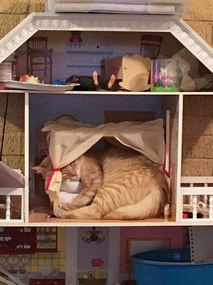 рыжий кот спит в кукольном домике