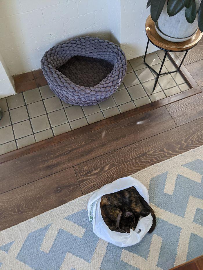 кот спит в пакете на полу