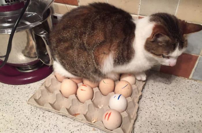 кот сидит на лотке с яйцами