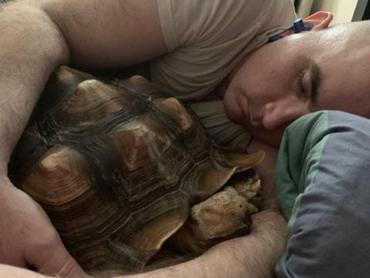мужчина спит в обнимку с черепахой