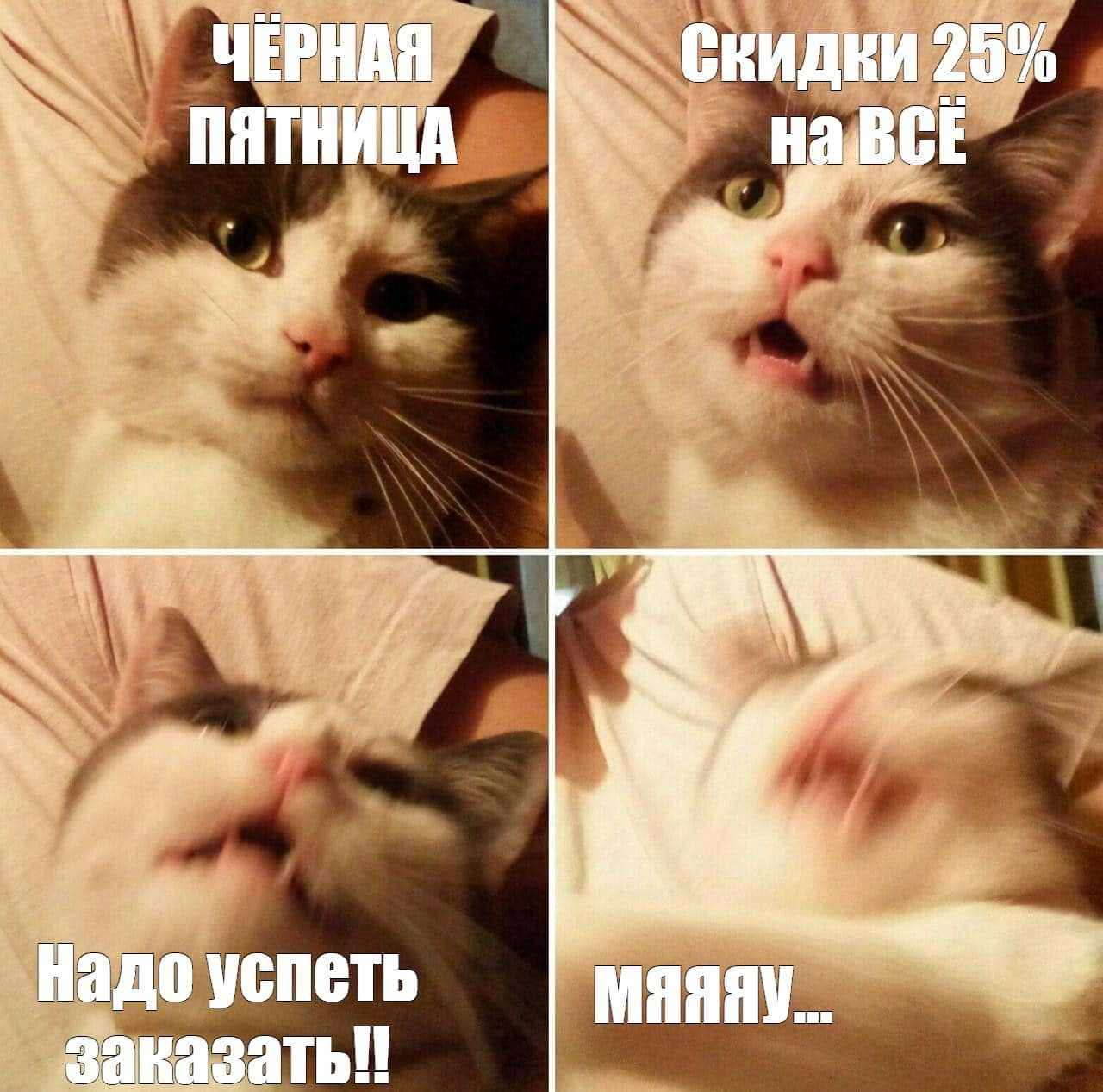 кошка мем
