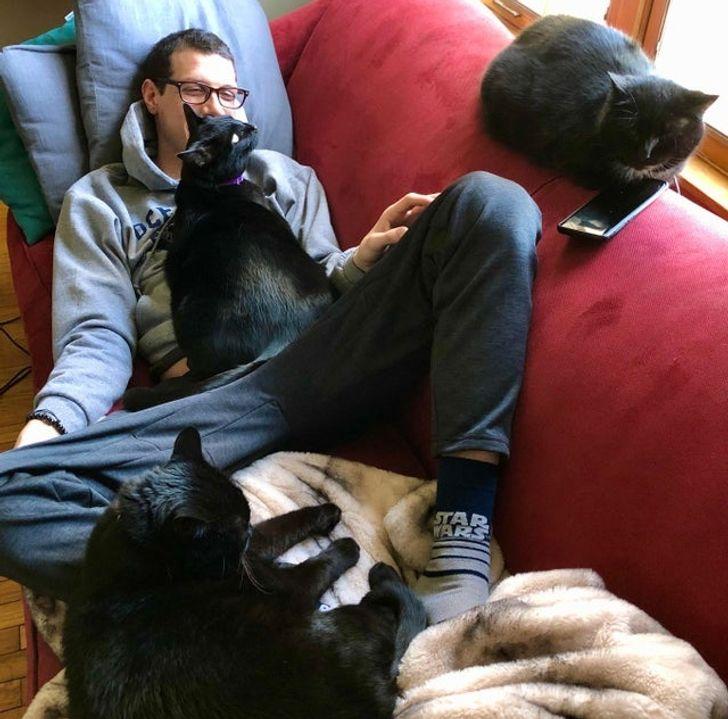 три черных кошки и парень на диване