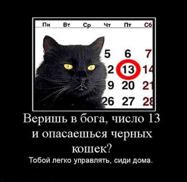 черный кот и календарь демотиватор