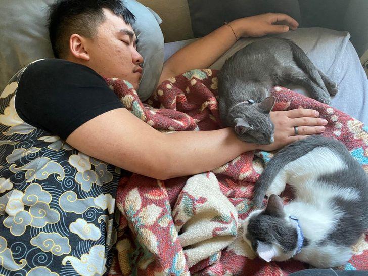 парень и два кота спят на кровати