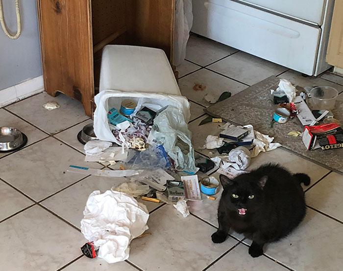 10+ фото котов, которые отличились плохим поведением