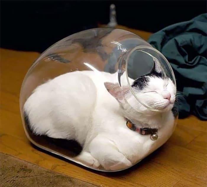 белый кот спит в банке