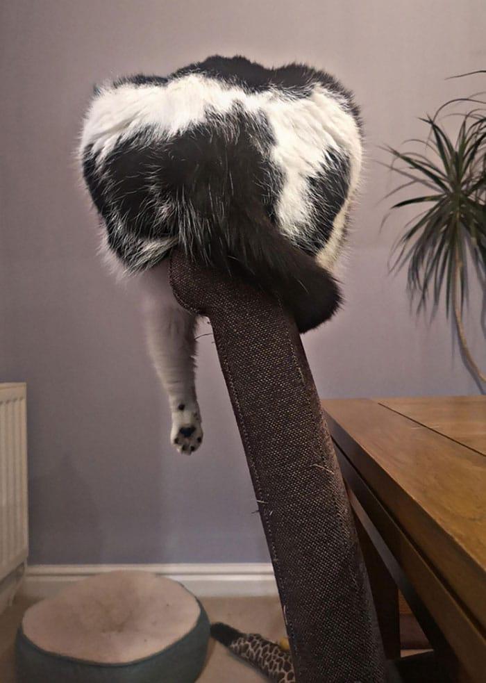 черно-белый кот спит на спинке кресла