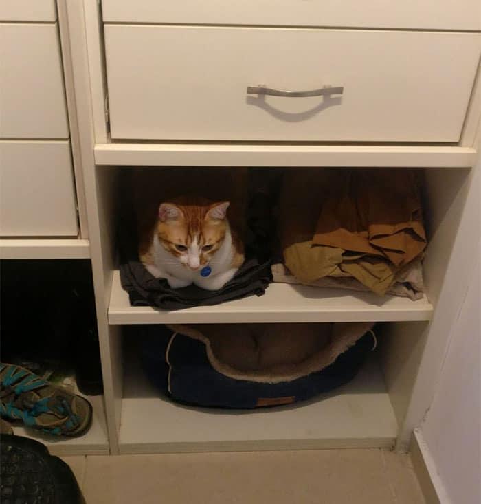 кот сидит на вещах на полке