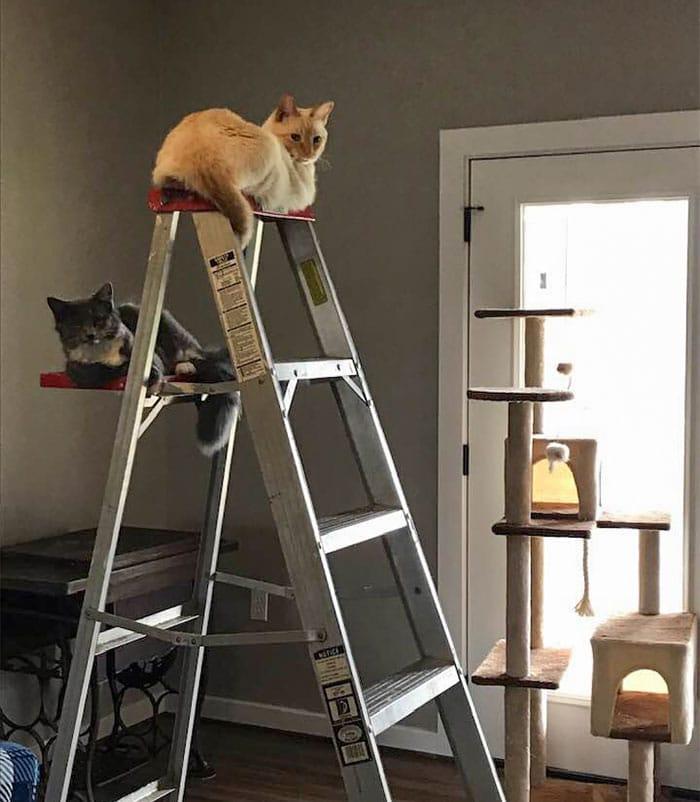 коты сидят на лестнице