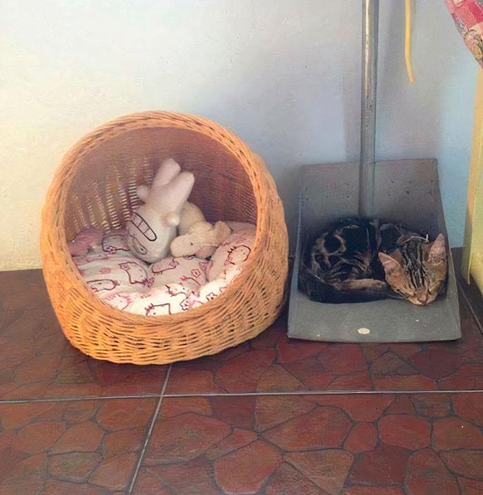кот спит в совке