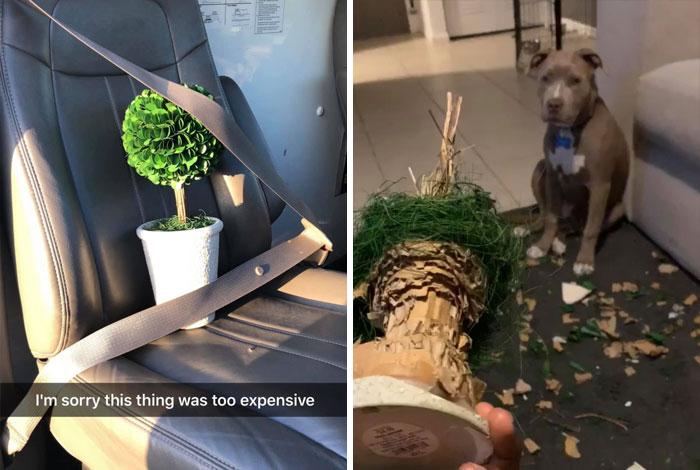 собака съела цветок