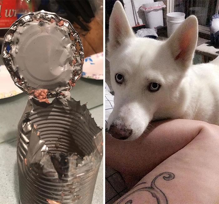 белый пес и консервная банка