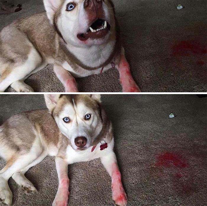 собака в губной помаде