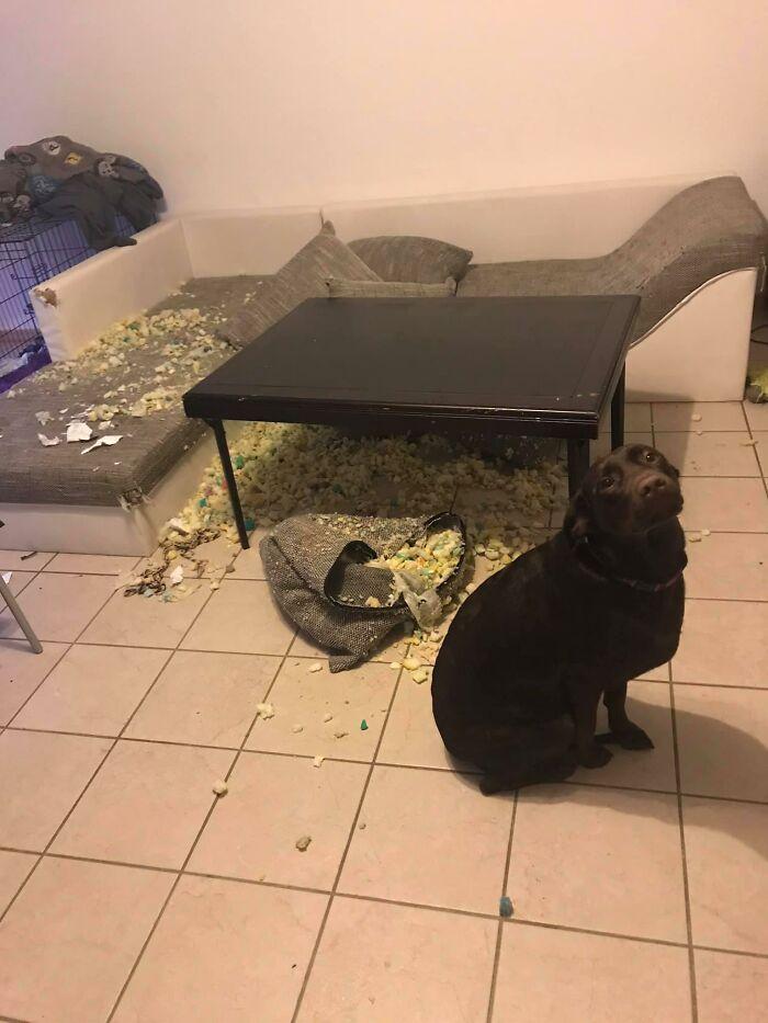 черная собака в комнате