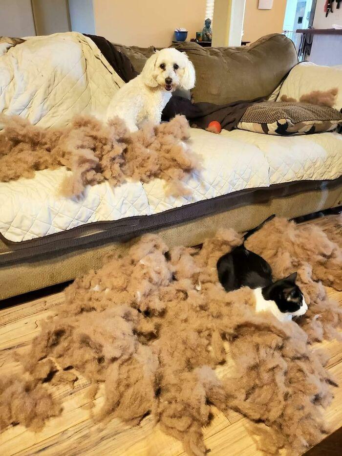 кот и собака возле дивана