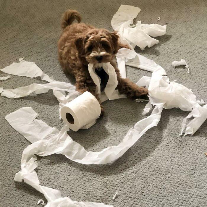 собака с рулоном туалетной бумаги