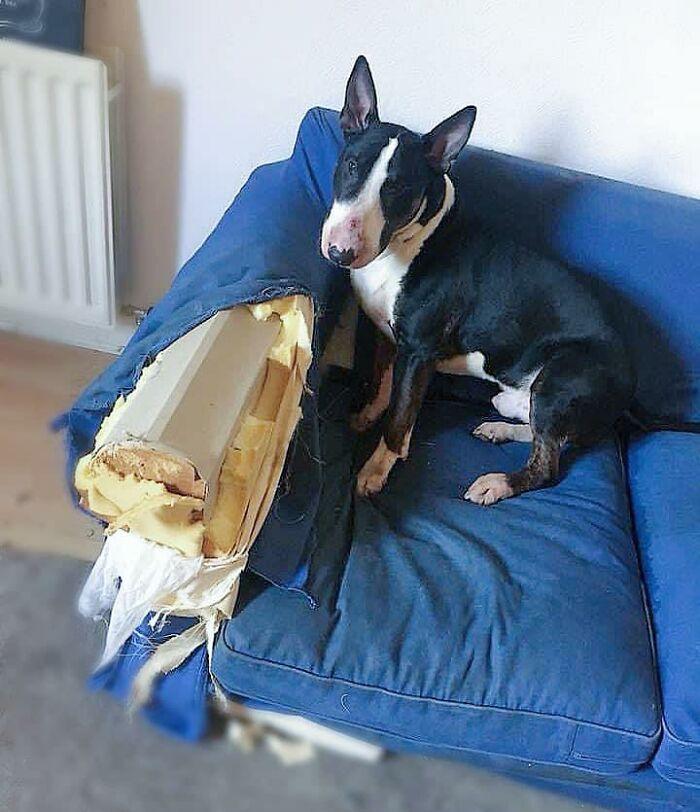 собака на синем кресле